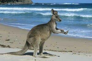 travailler-australie